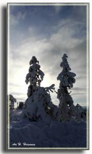 Maantiesusi - Levitunturin rinteeltä - 2018